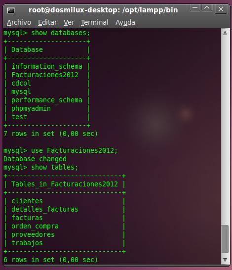 Terminal MySQL